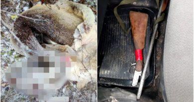 Un minor din raionul Fălești a împușcat o căprioară cu o armă deținută ilegal