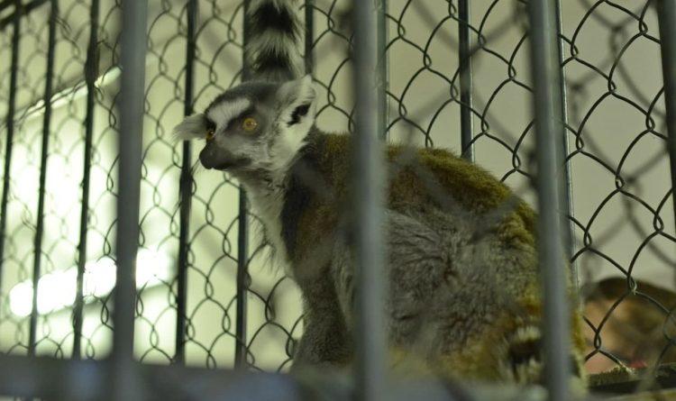 /VIDEO/ Grădina Zoologică din Chișinău s-a îmbogățit cu 31 de viețuitoare noi
