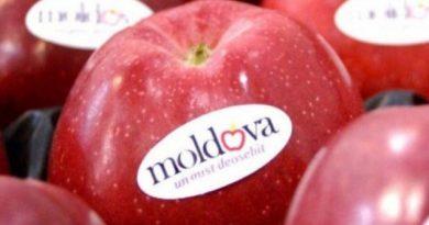 Reacția ANSA, după ce un lot de peste 20 tone de mere din Moldova a fost interzis pentru import în Federația Rusă