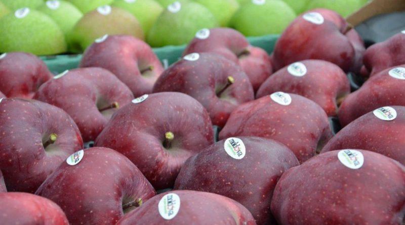 Un lot de peste 20 tone de mere din Moldova a fost interzis pentru import în Federația Rusă