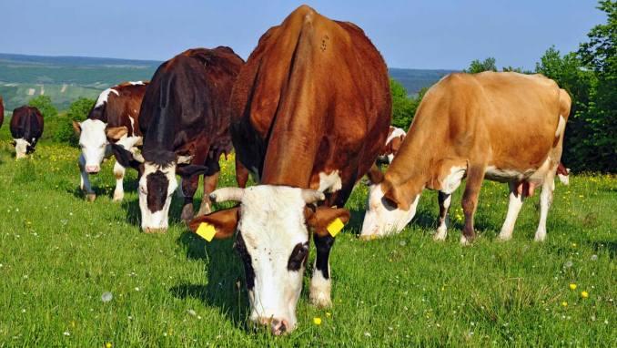 Foto Primul apel de subvenționare per cap de animal, lansat de Ministerul Agriculturii 4 05.08.2021