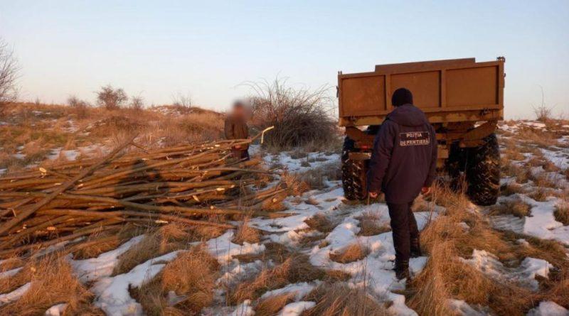 Un bărbat din raionul Edineț riscă amendă pentrucă a fost prins la tăiat lemne în zona de frontieră