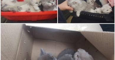 /VIDEO/ Un bărbat a fost reținut pentru trafic ilegal cu pisici de rasă