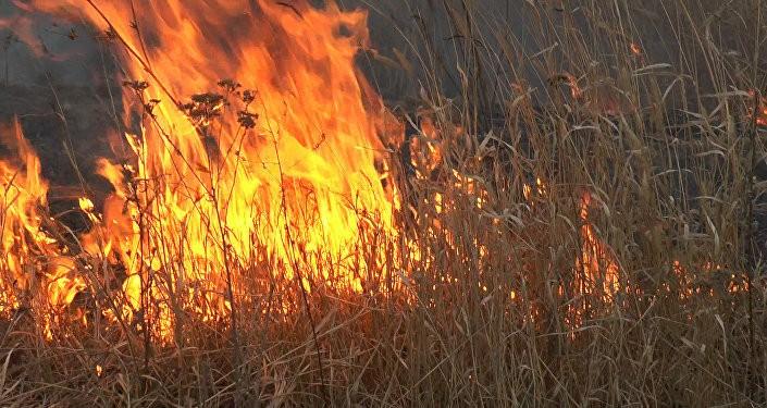 Un bărbat din raionul Fălești a ars de viu, după ce a dat foc la iarba uscată de pe imaș