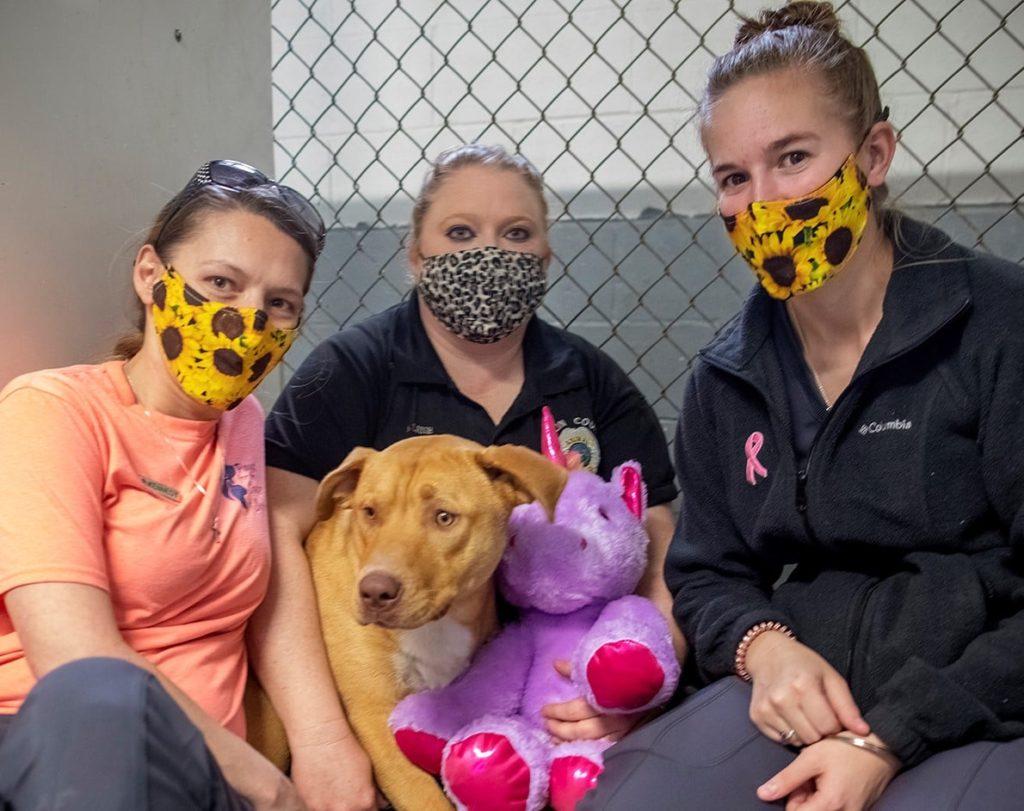 /FOTO/ Un câine fără stăpân din SUA a primit cadou un unicorn de pluș pe care îl furase de cinci ori dintr-un magazin 3 18.04.2021