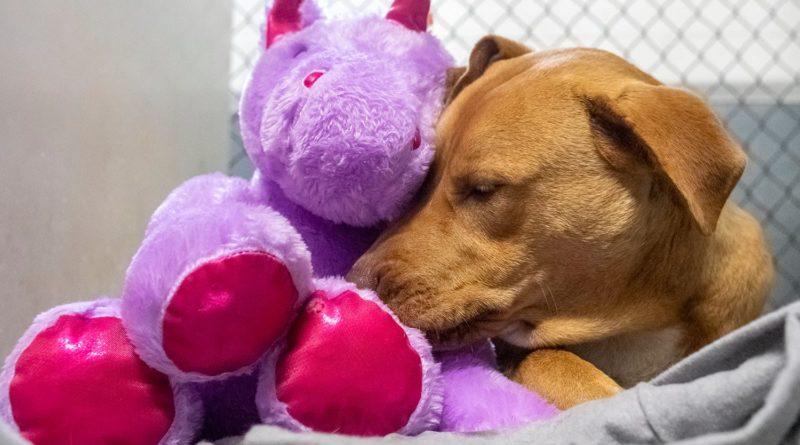 /FOTO/ Un câine fără stăpân din SUA a primit cadou un unicorn de pluș pe care îl furase de cinci ori dintr-un magazin