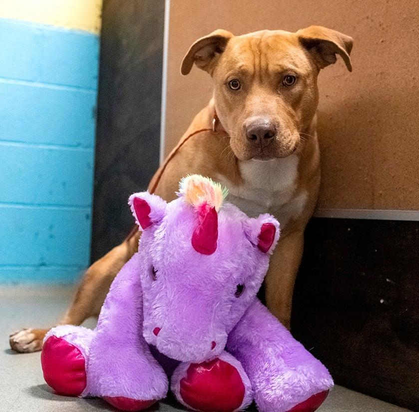 /FOTO/ Un câine fără stăpân din SUA a primit cadou un unicorn de pluș pe care îl furase de cinci ori dintr-un magazin 1 18.04.2021