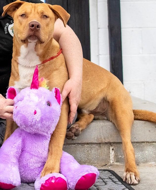 /FOTO/ Un câine fără stăpân din SUA a primit cadou un unicorn de pluș pe care îl furase de cinci ori dintr-un magazin 4 18.04.2021