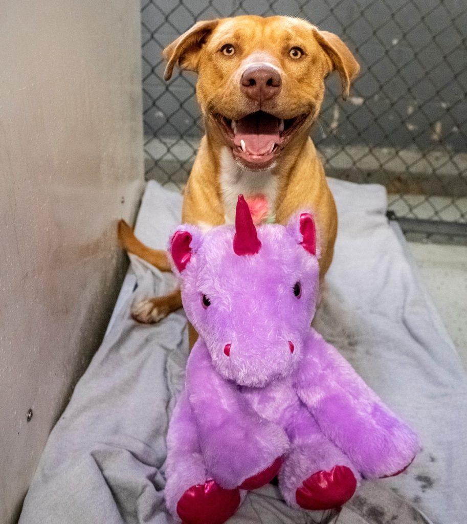 /FOTO/ Un câine fără stăpân din SUA a primit cadou un unicorn de pluș pe care îl furase de cinci ori dintr-un magazin 5 18.04.2021