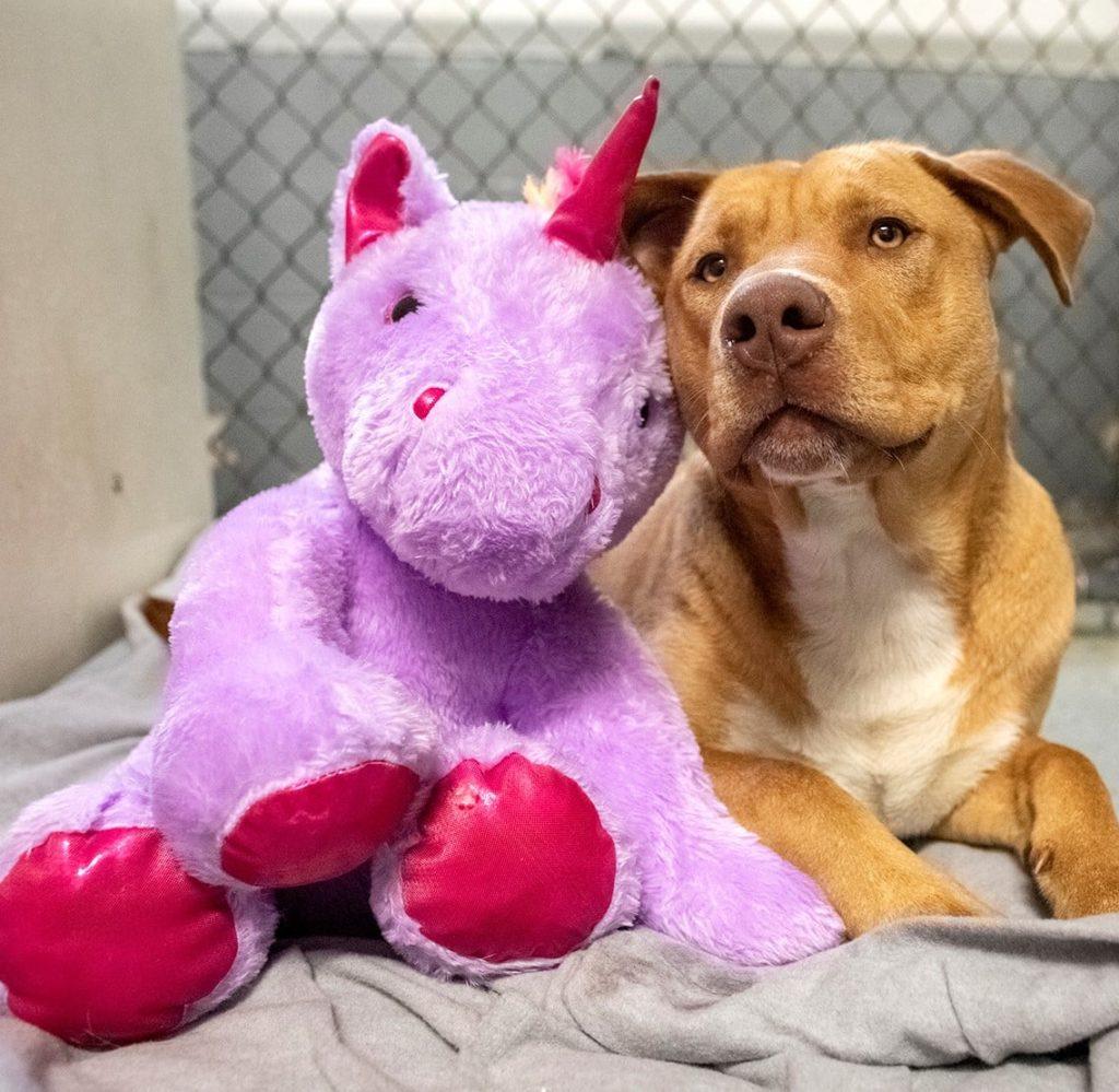 /FOTO/ Un câine fără stăpân din SUA a primit cadou un unicorn de pluș pe care îl furase de cinci ori dintr-un magazin 6 18.04.2021
