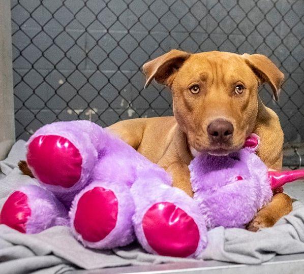 /FOTO/ Un câine fără stăpân din SUA a primit cadou un unicorn de pluș pe care îl furase de cinci ori dintr-un magazin 7 18.04.2021