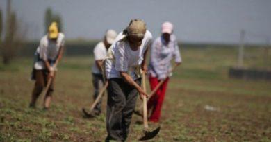Munca zilierilor din agricultură ar putea fi plătită cu vouchere