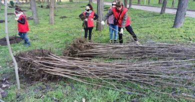 В Кишиневе возобновлена кампания по посадке деревьев 2 17.04.2021