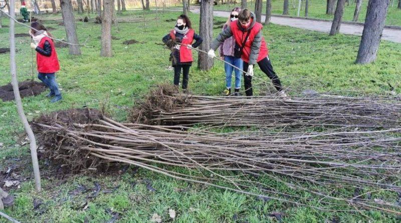 В Кишиневе возобновлена кампания по посадке деревьев 4 17.04.2021