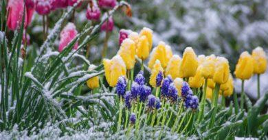 Foto Молдавские синоптики прогнозируют заморозки от -1 до -3 градусов по Цельсию 24—27 апреля 3 28.07.2021