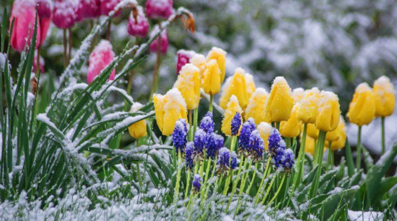Молдавские синоптики прогнозируют заморозки от -1 до -3 градусов по Цельсию 24—27 апреля 39 14.05.2021