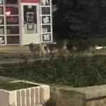 Очередной случай нападения собак на детей зафиксирован в Бэлць 7 11.05.2021