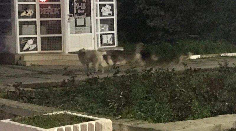 Очередной случай нападения собак на детей зафиксирован в Бэлць 2 12.05.2021