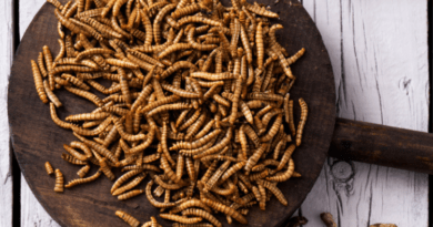 Uniunea Europeană aprobă prima insectă declarată sigură pentru consum uman 3 12.05.2021