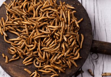 Foto Uniunea Europeană aprobă prima insectă declarată sigură pentru consum uman 6 25.07.2021
