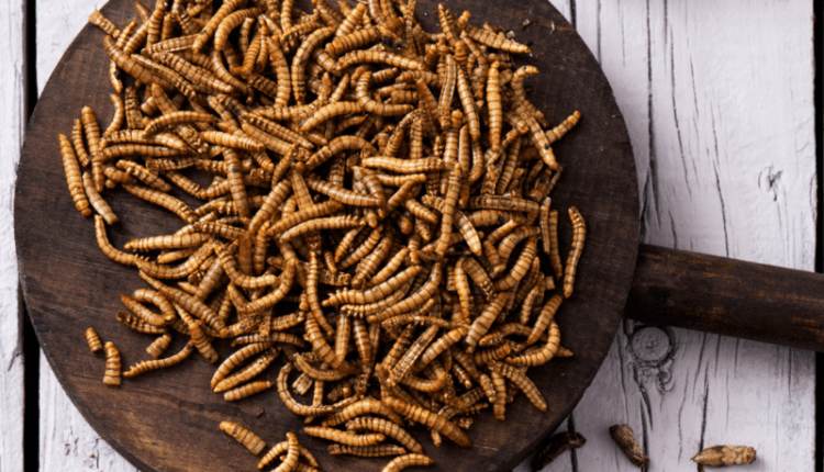 Foto Uniunea Europeană aprobă prima insectă declarată sigură pentru consum uman 1 18.09.2021