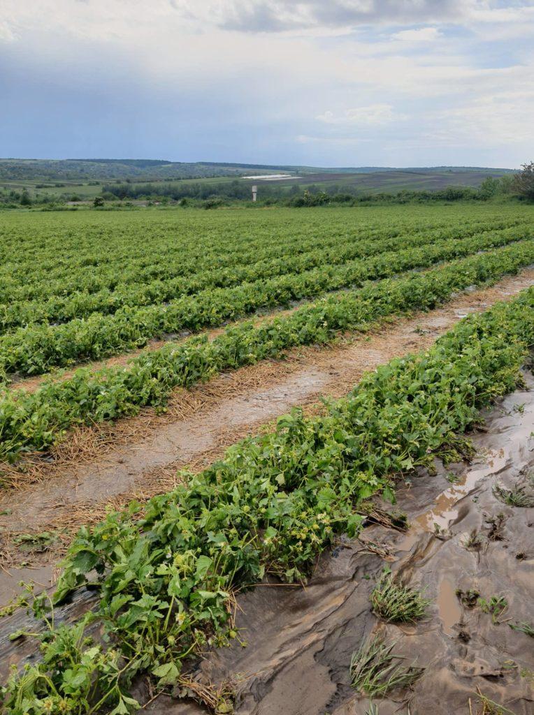 Foto /FOTO/ A plouat cu grindină în raionul Florești. Mai multe culturi au fost distruse 2 17.10.2021