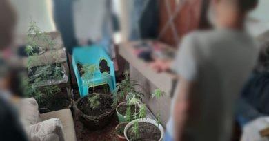 /FOTO/ Mai multe plante de mac și cânepă au fost depistate în gospodăriile a doi locuitori din municipiul Bălți
