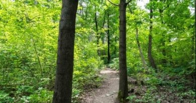Un tânăr a fost găsit strangulat într-o fâșie forestieră din raionul Fălești