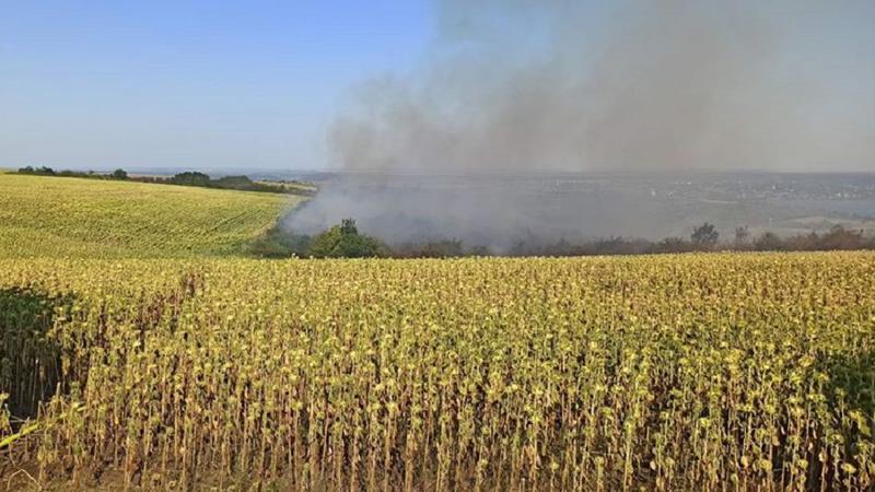 Incendiu de vegetație în raionul Drochia. Un lan de floarea soarelui a fost distrus de flăcări