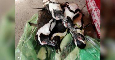 Foto Zeci de pinguini, găsiți morți pe o plajă. Ce s-a întâmplat 4 21.09.2021