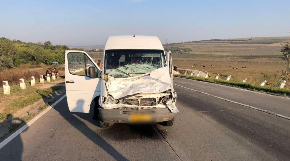Accident în raionul Sîngerei. O bovină a fost lovită mortal