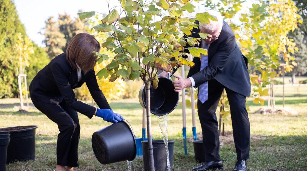Foto /FOTO/ Maia Sandu a sădit, impreună cu președintele Germaniei, doi arbori de lalea, la Grădina Botanică 1 27.10.2021