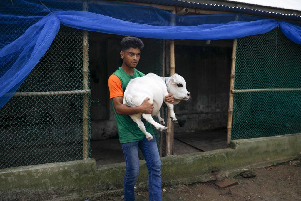 Foto Rani, cea mai mică bovină din lume, a intrat postum în Guinness World Records 4 27.10.2021