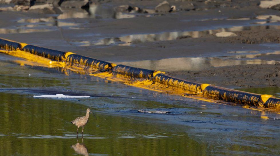 Foto /FOTO/Sute de pești și păsări moarte, pe o plajă din California, după o scurgere de petrol de proporții istorice 1 27.10.2021