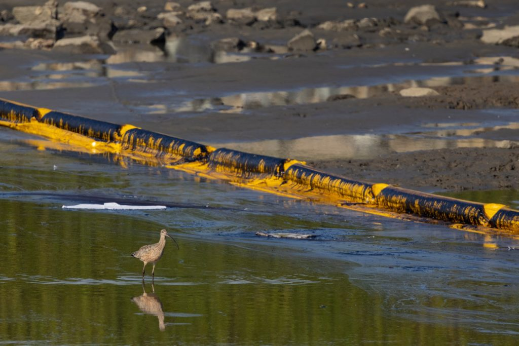 Foto /FOTO/Sute de pești și păsări moarte, pe o plajă din California, după o scurgere de petrol de proporții istorice 2 27.10.2021