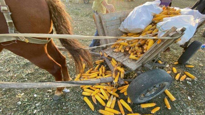 Un bărbat din raionul Nisporeni a fost strivit de propriul cal